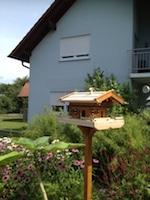 Vogelhaus selber bauen Erfahrungen von Achim Foto 4