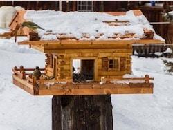 Vogelhaus.com Erfahrungsbericht mit Bauanleitung